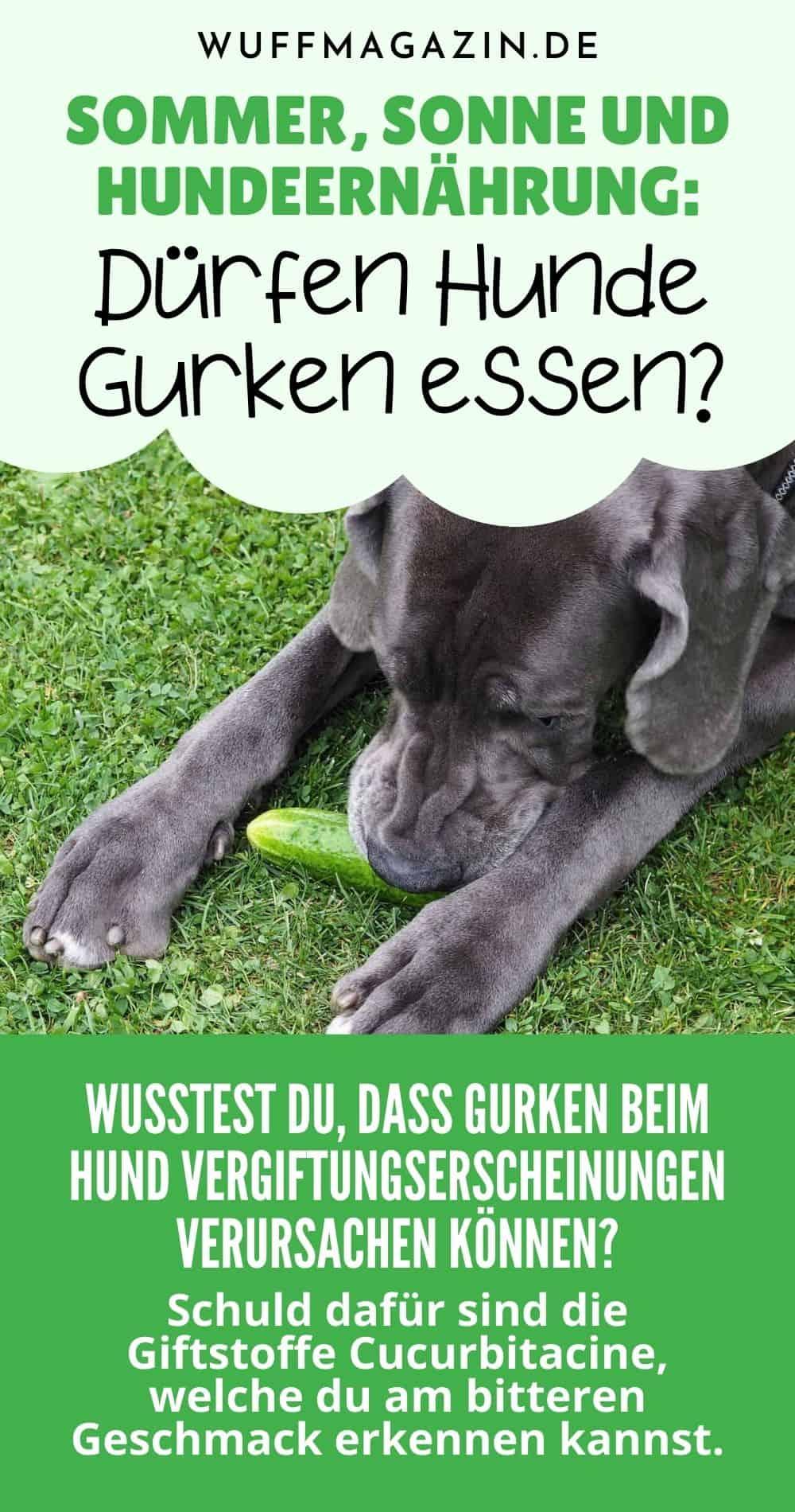 Sommer, Sonne und Hundeernährung Dürfen Hunde Gurken essen