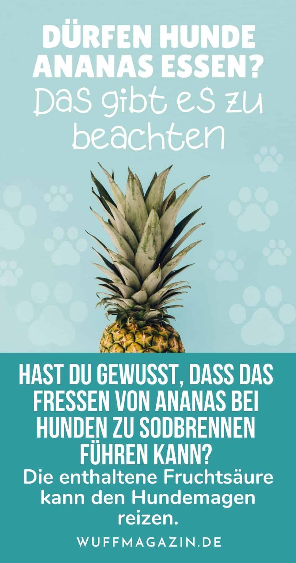 Dürfen Hunde Ananas essen Das gibt es zu beachten