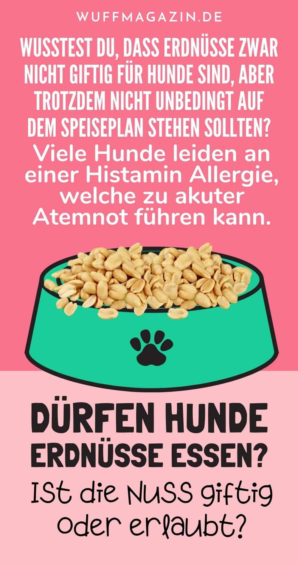 Dürfen Hunde Erdnüsse essen Ist die Nuss giftig oder erlaubt