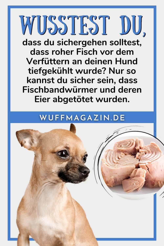 Dürfen Hunde Thunfisch essen Der Unterschied zwischen roh und aus der Dose