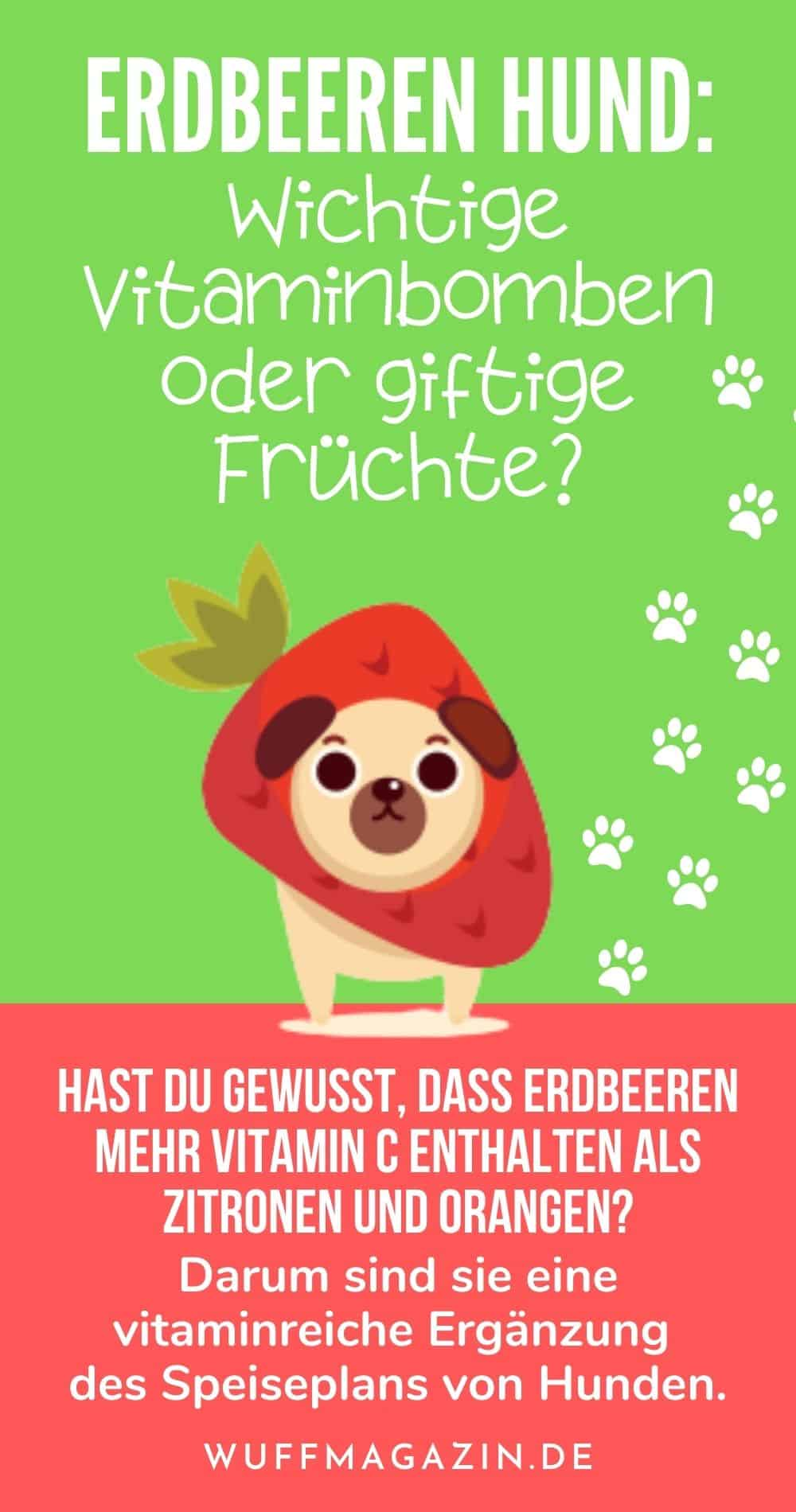 Erdbeeren Hund Wichtige Vitaminbomben oder giftige Früchte
