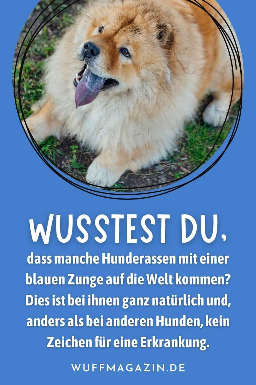 Hund mit blauer Zunge Rassen und Gründe für die außergewöhnliche Färbung