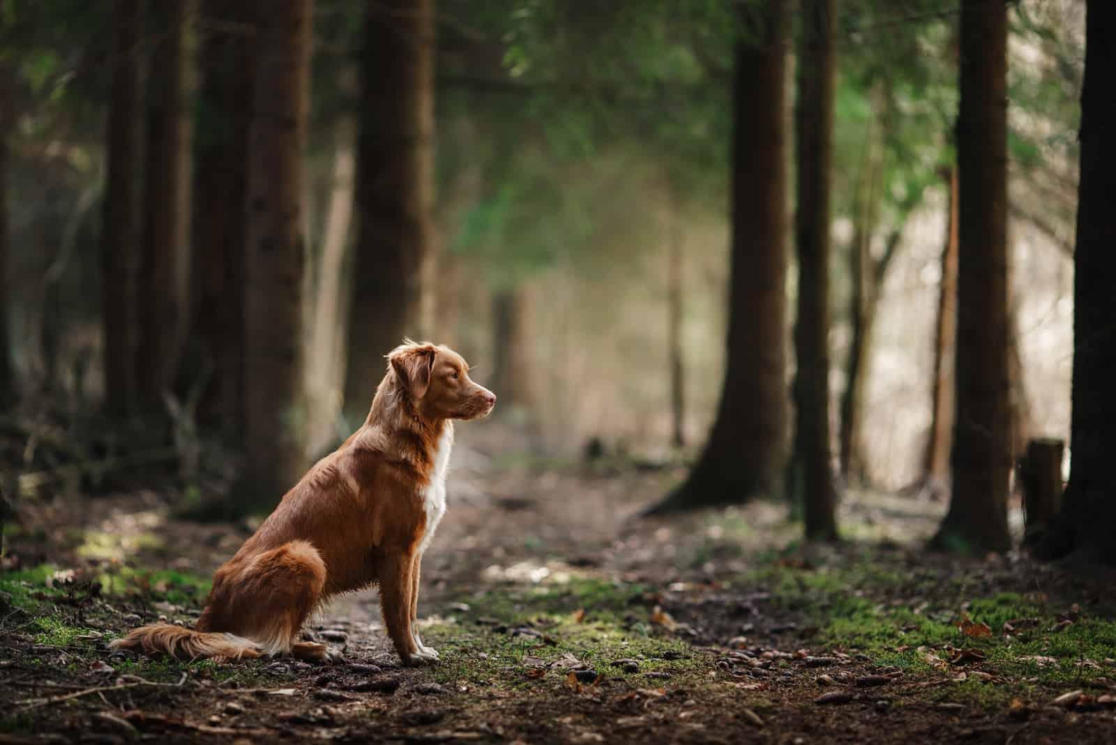 Hund sitzt im Wald am Frühling