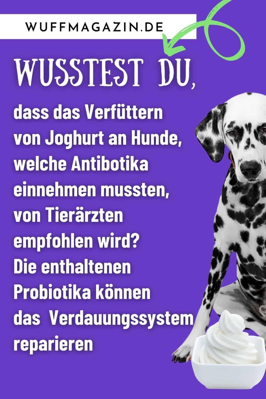 Joghurt für Hunde - Welche Milchprodukte verträgt mein Hund