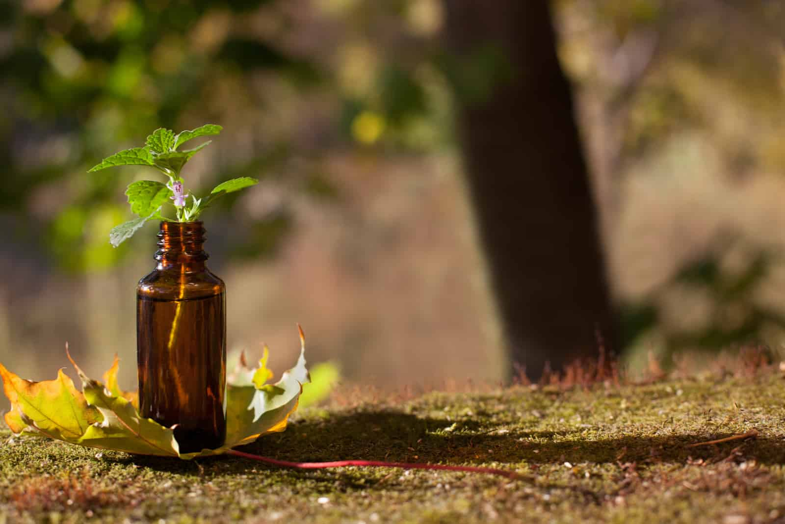 Naturmedizin - braune Flasche und Herbst