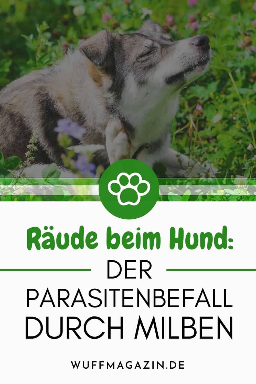 Räude beim Hund Der Parasitenbefall durch Milben