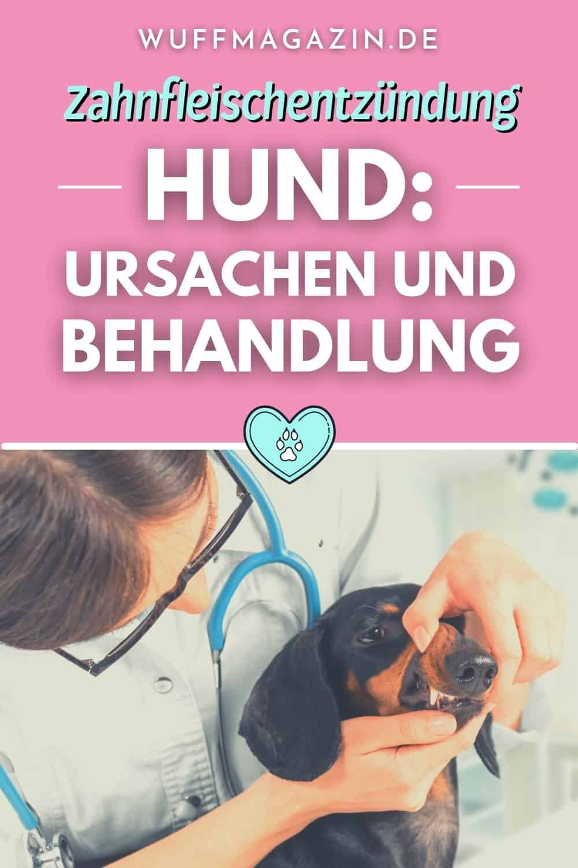 Zahnfleischentzündung Hund Ursachen und Behandlung