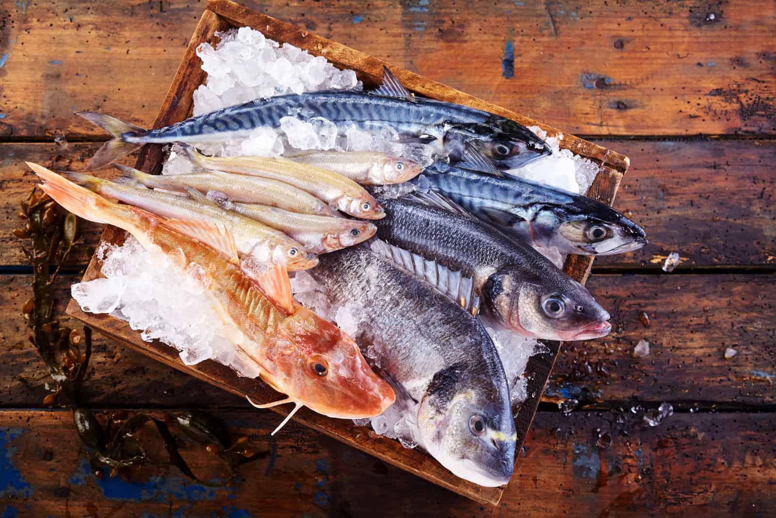 frischer Seefisch auf Eis in einer Schüssel