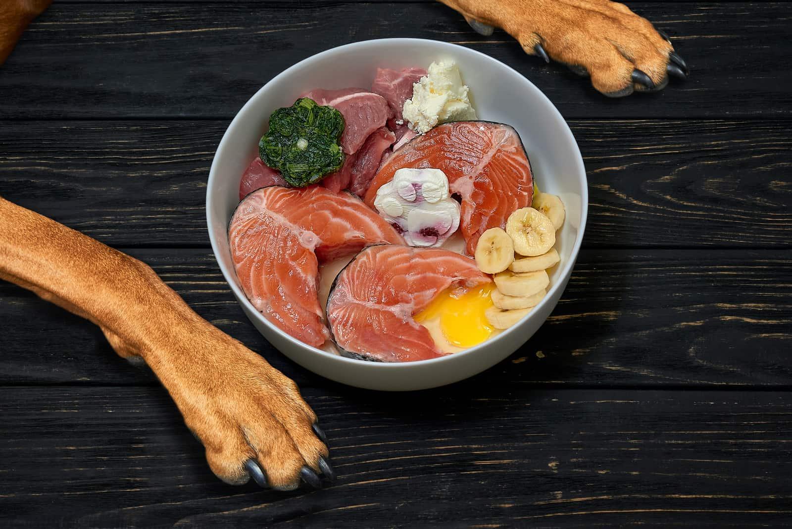 natürliches frisches Futter in einer Schüssel vor dem Hund