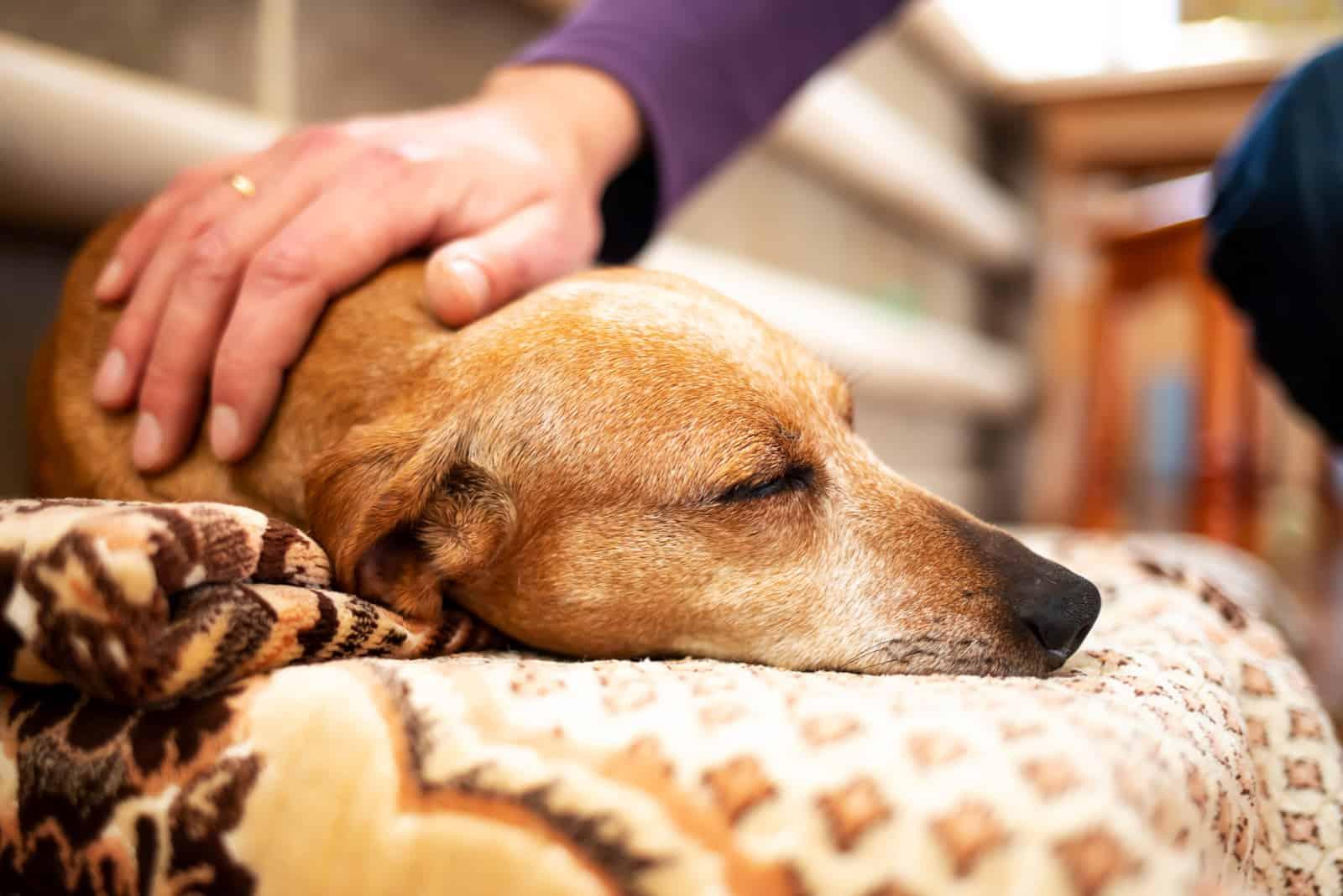 Ein Mann streichelt einen schlafenden Hund
