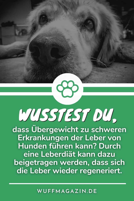 Leberdiät Hund Tipps für die Ernährung leberkranker Hunde