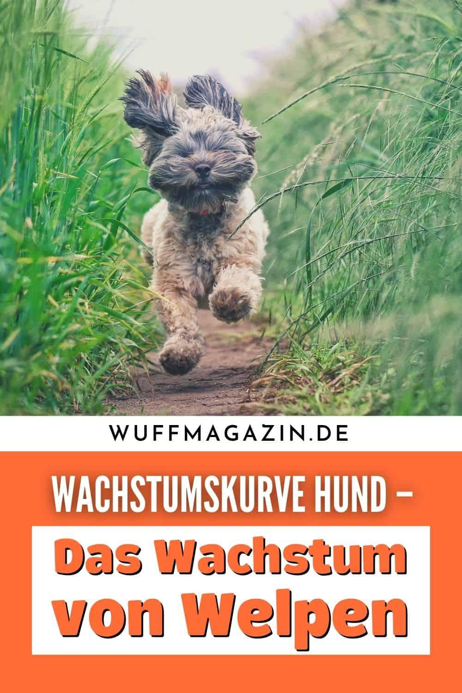 Wachstumskurve Hund - Das Wachstum von Welpen