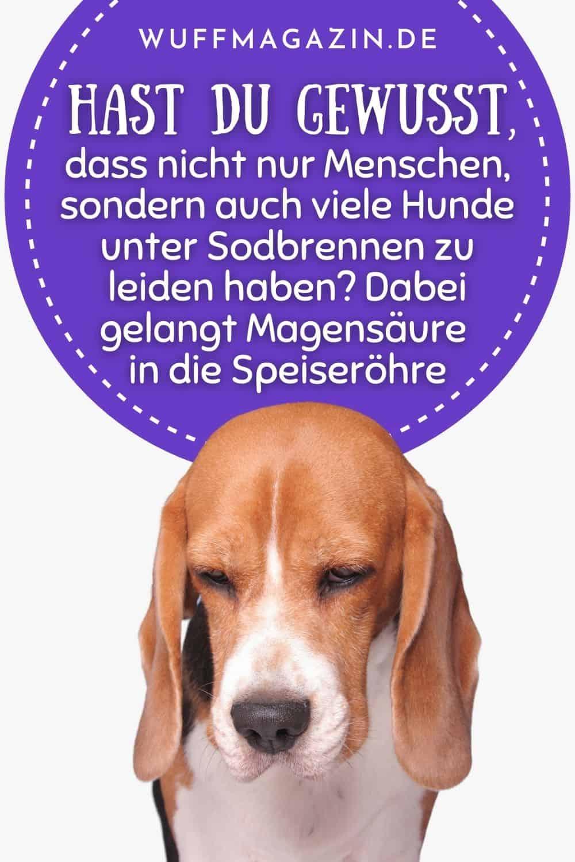 Welches Futter bei Sodbrennen beim Hund Über Symptome und Behandlung