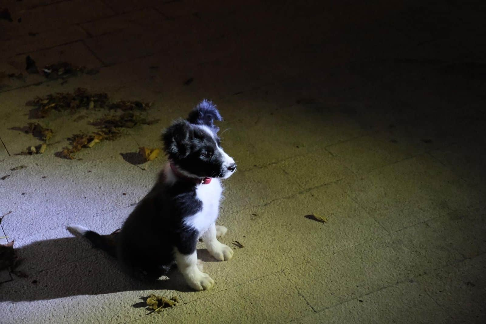 Abends sitzt ein schwarzer Welpe auf dem Beton