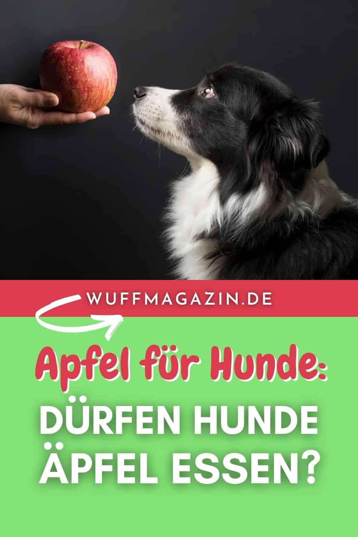 Apfel für Hunde Dürfen Hunde Äpfel essen