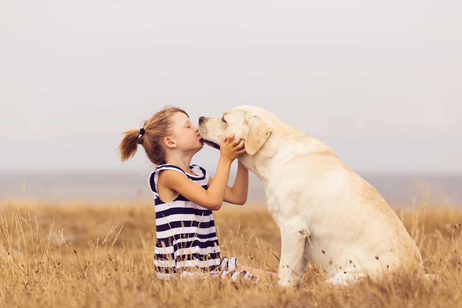 Das Mädchen küsst die Schnauze eines Labradors