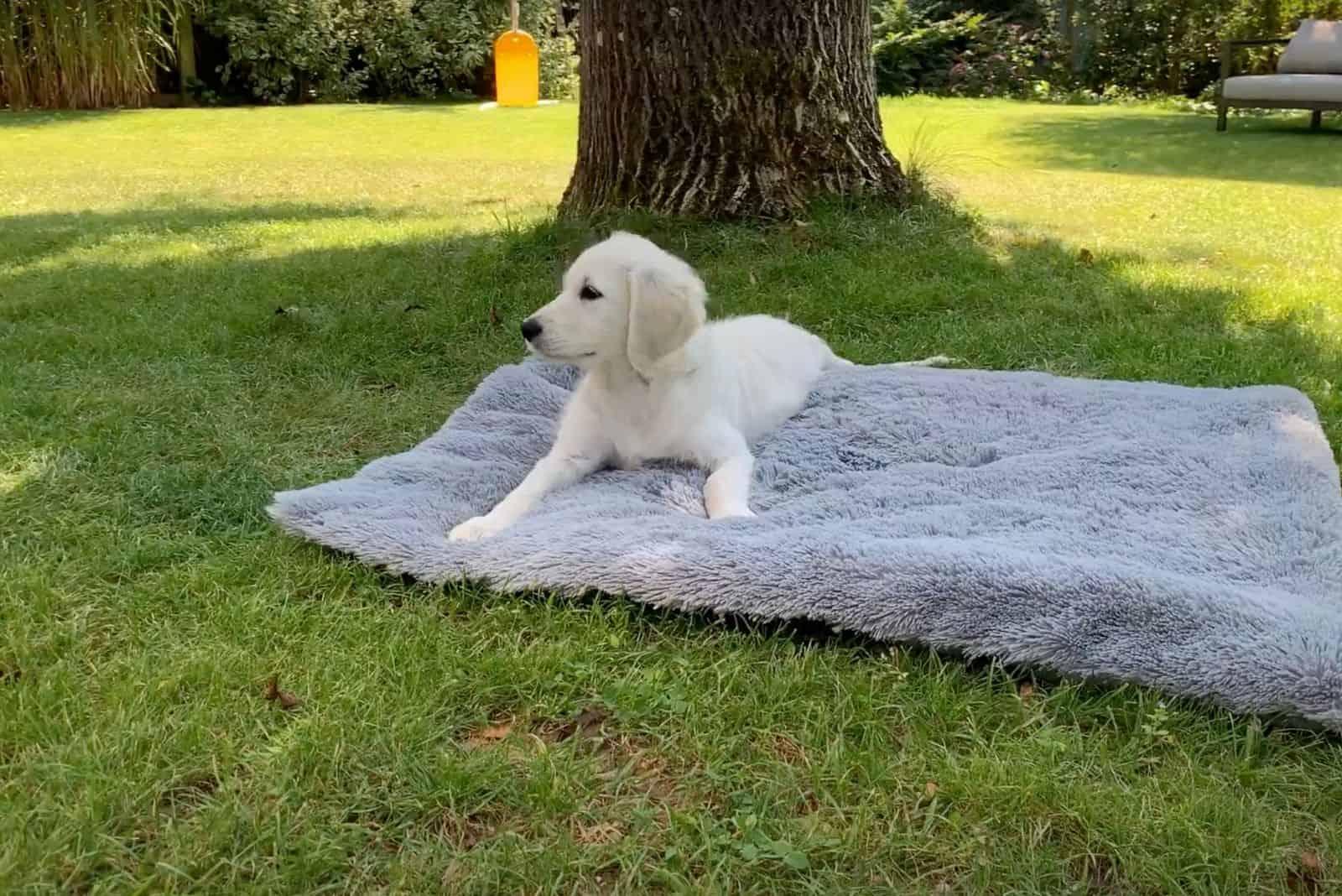 Deckentraining Hund
