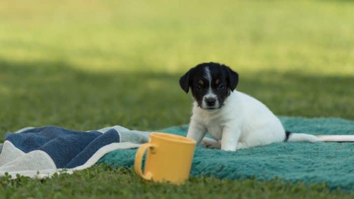 Deckentraining Hund: Wie man Hunden gutes Benehmen lehrt