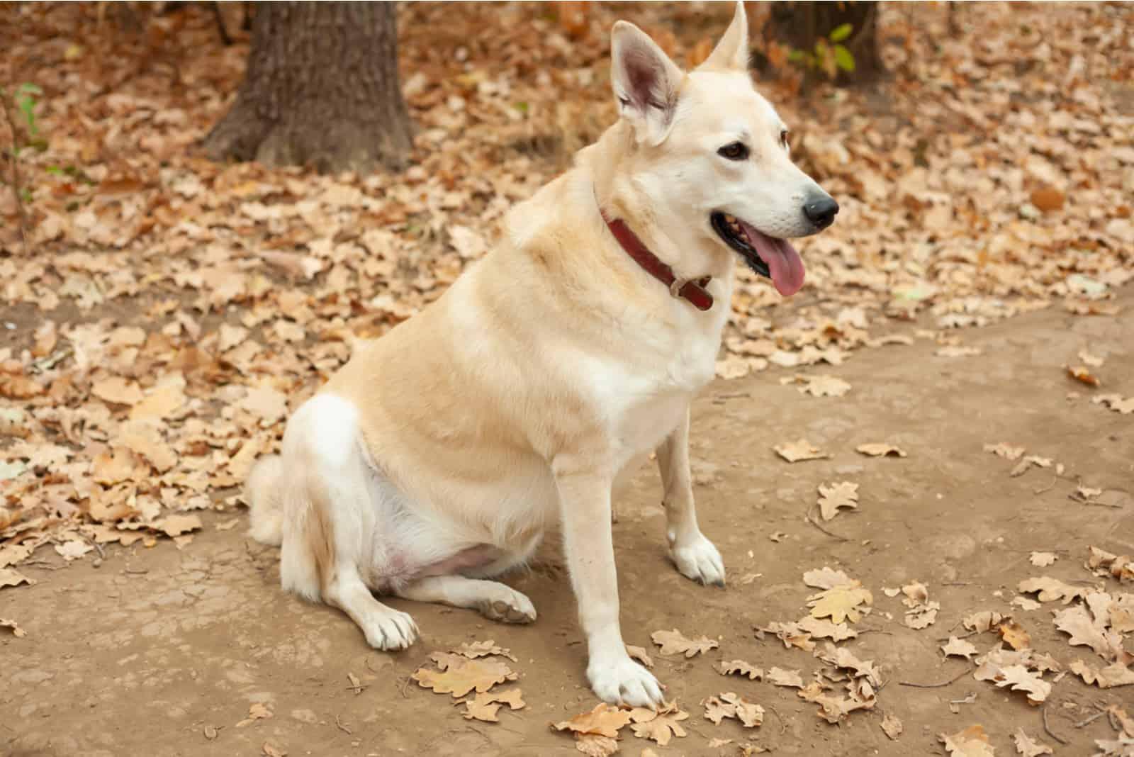 Der Hund sitzt nach einem Spaziergang im Park