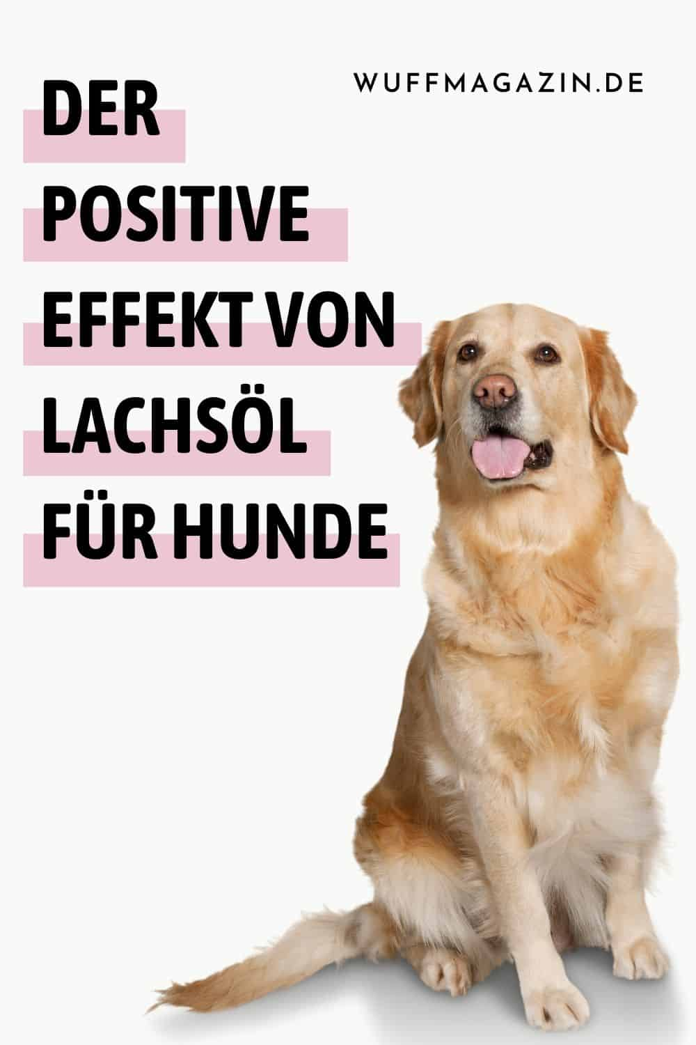 Der positive Effekt von Lachsöl für Hunde