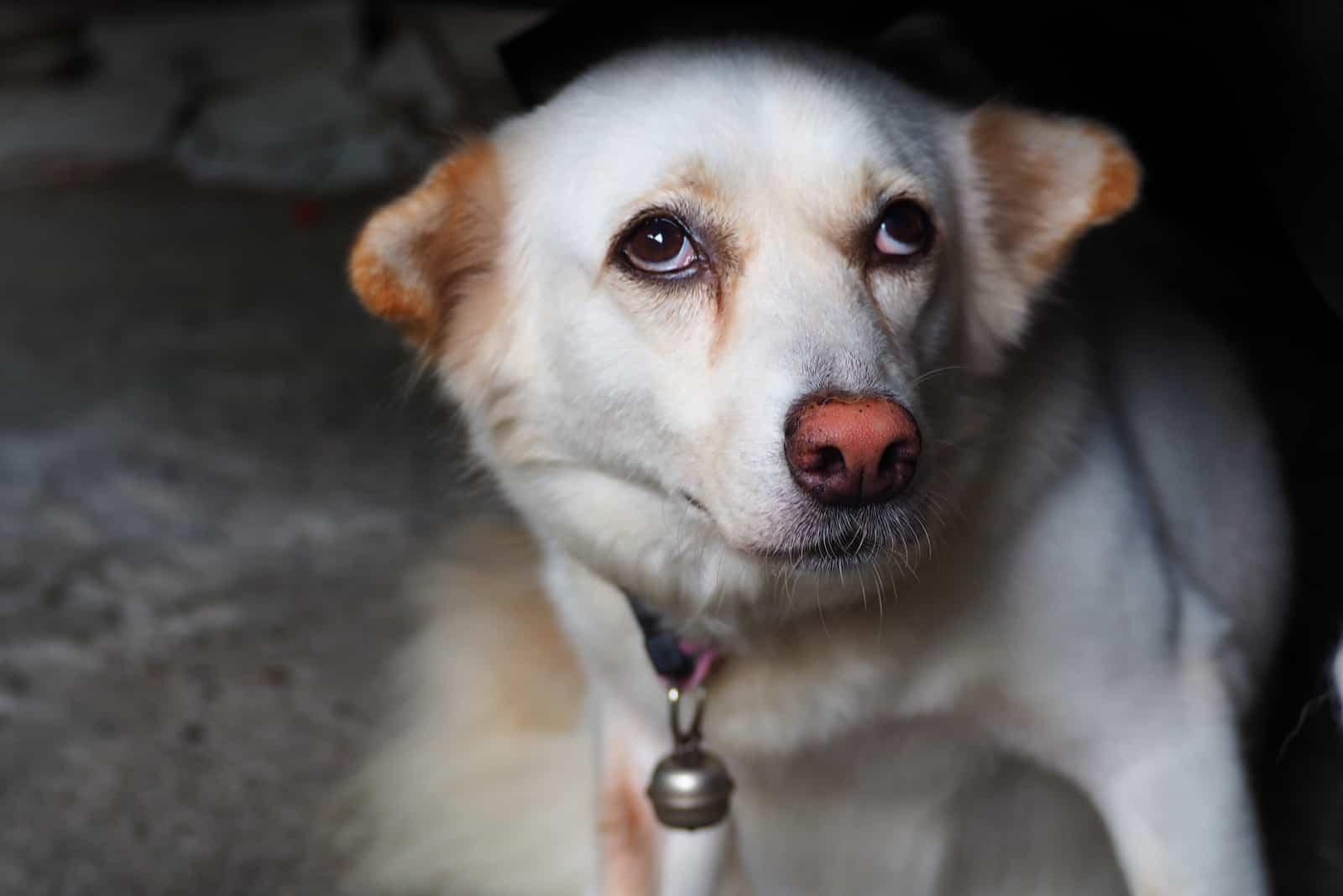 Ein Hund, der von einem Fremden erschreckt wird