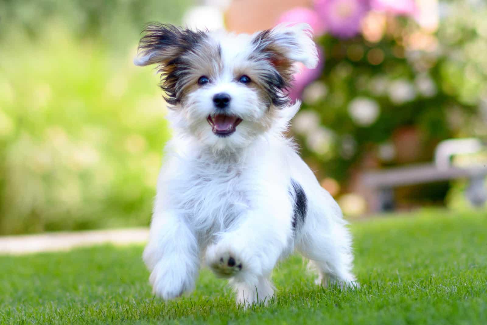 Ein schöner Hund rennt über die Wiese