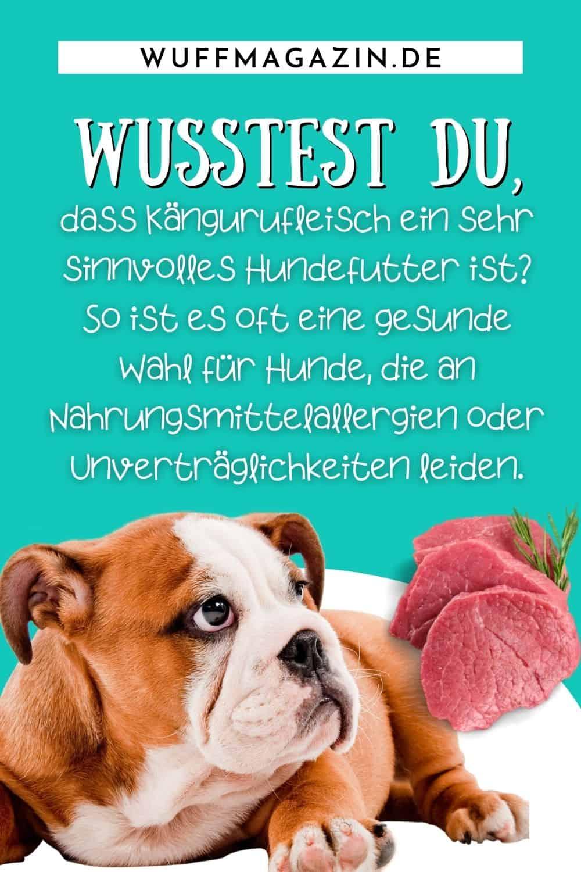 Fleisch für Hunde Welche Fleischsorten sind die besten