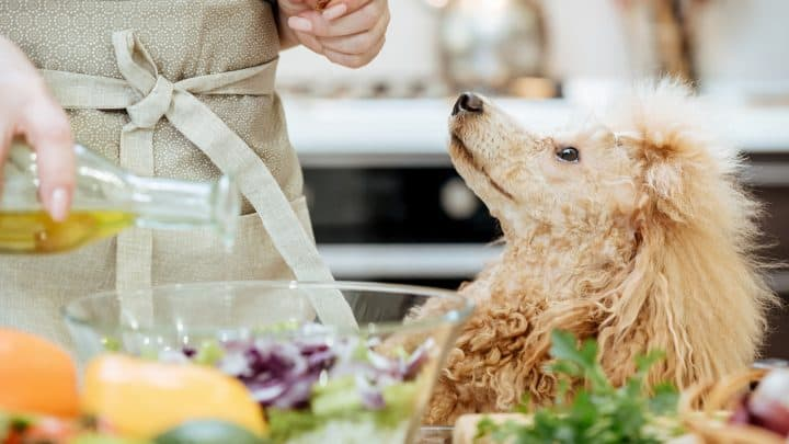 Der Hund sieht die Frau an, während sie kocht