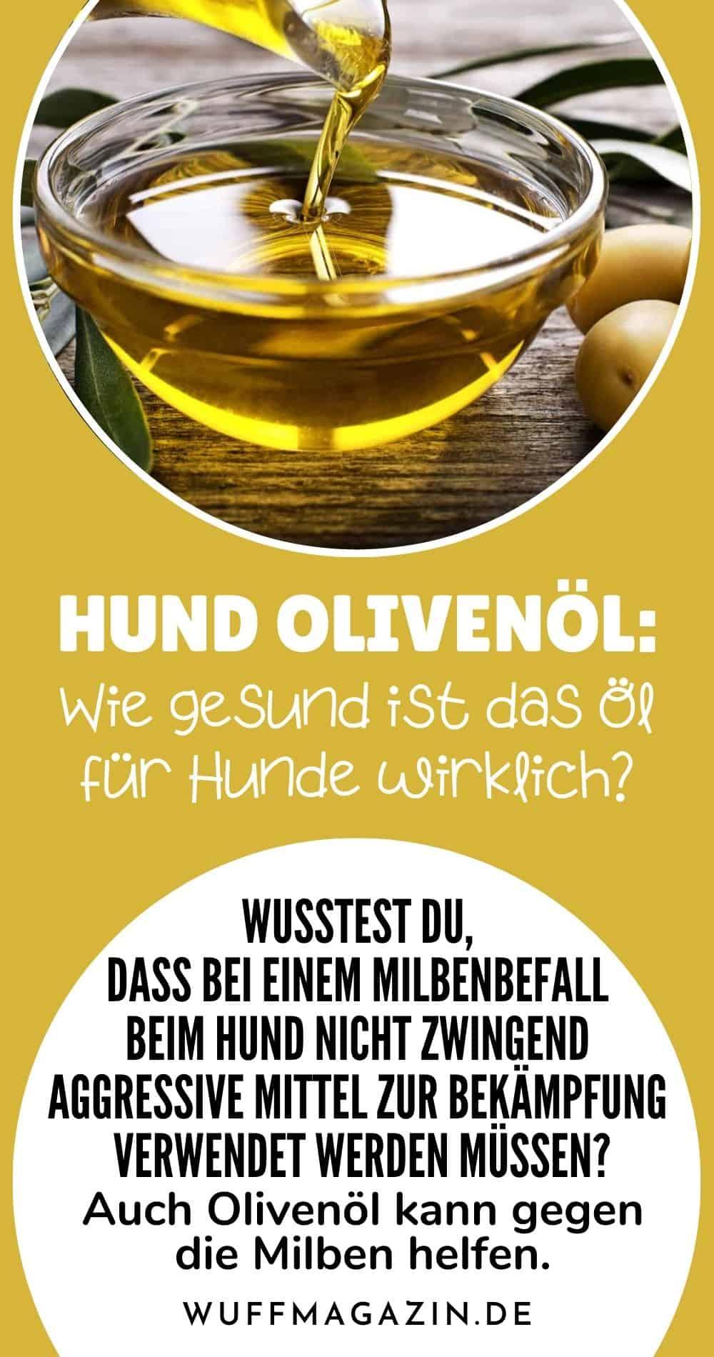 Hund Olivenöl – Wie gesund ist das Öl für Hunde wirklich