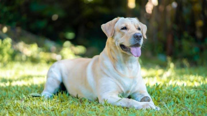 Hund sitzt auf dem Gras