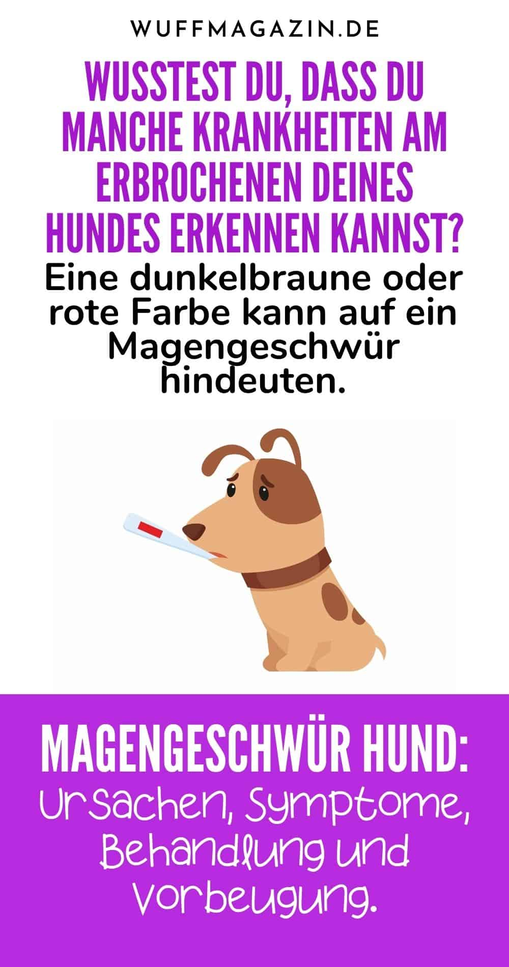 Magengeschwür Hund Ursachen, Symptome, Behandlung und Vorbeugung