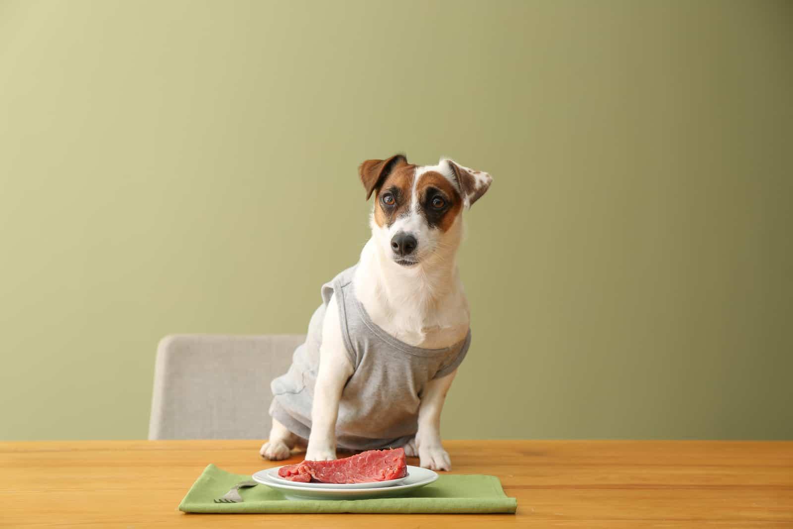 Netter lustiger Hund und Teller mit rohem Fleisch auf Tisch