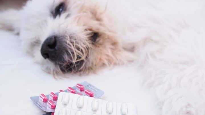 Ein kranker Hund liegt neben Schmerzmitteln