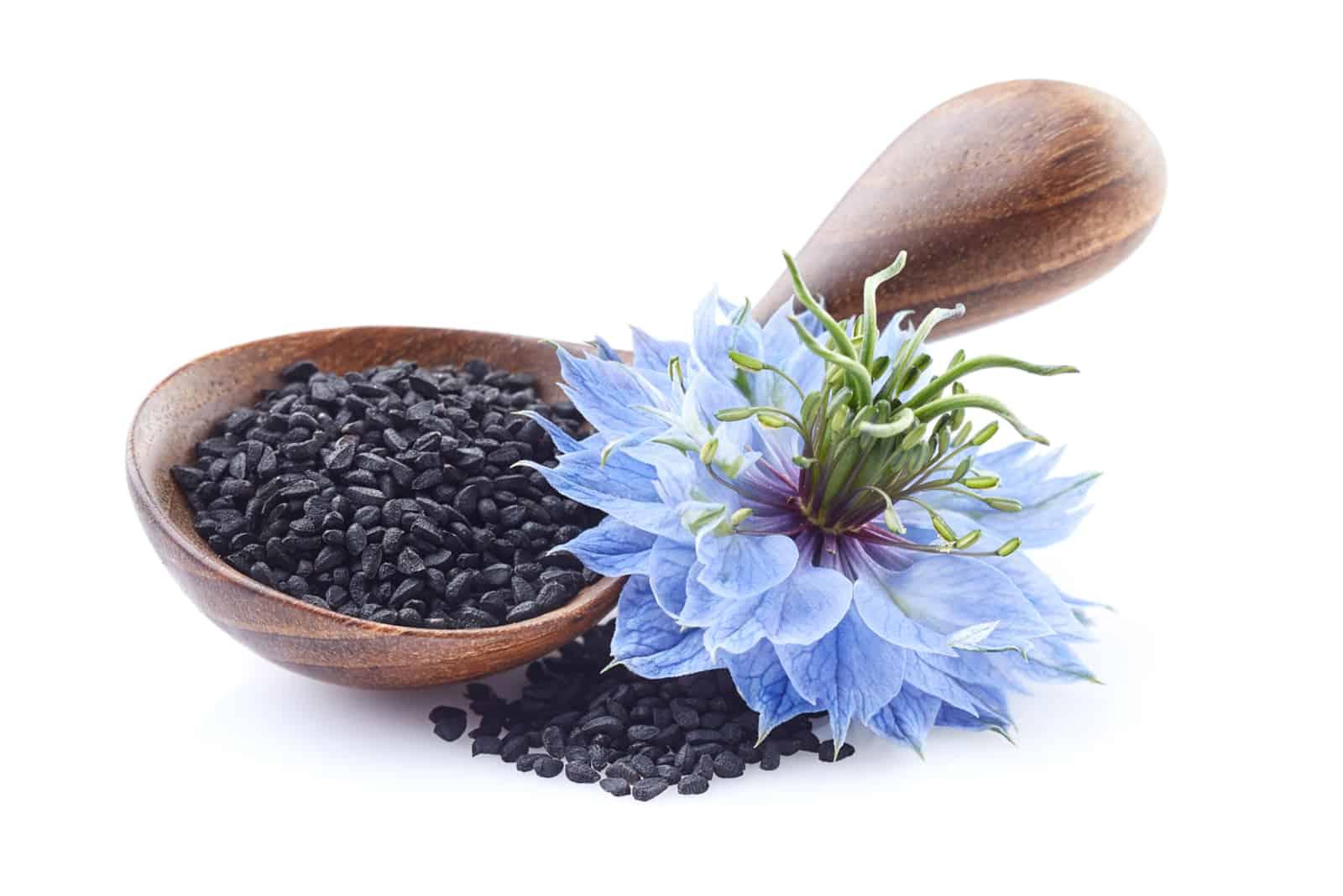 Schwarzkümmel mit Nigella Sativa Blume