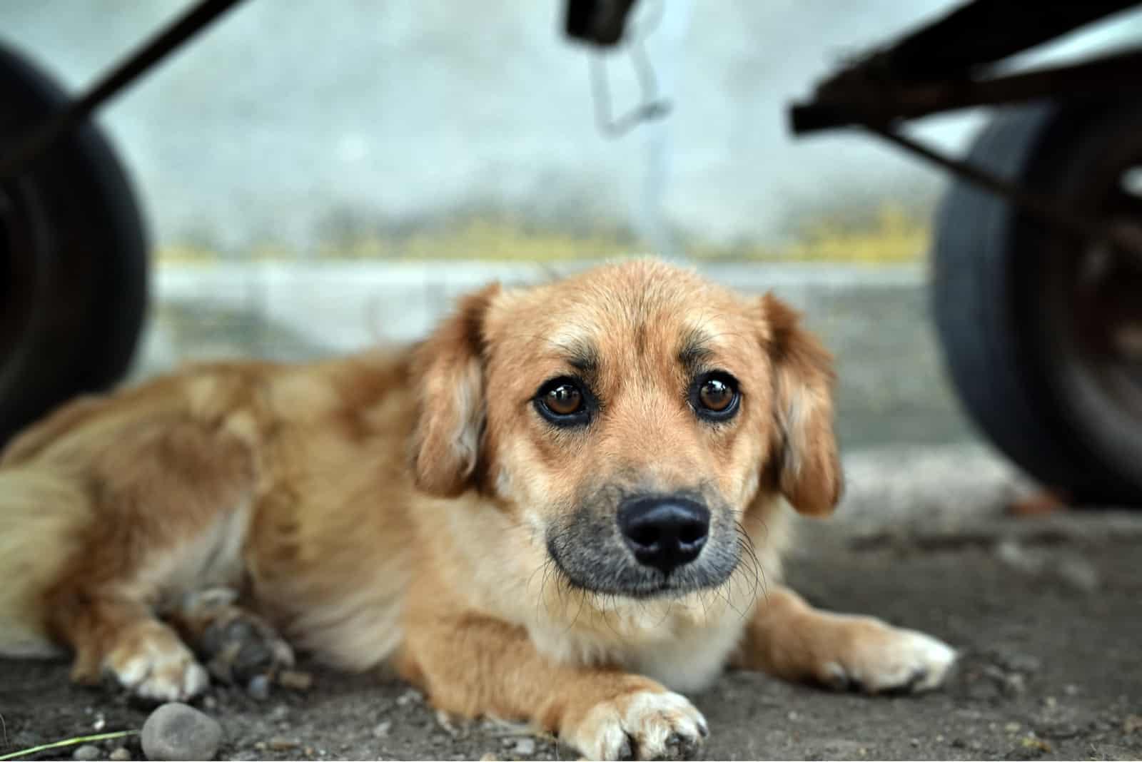 Diese Nervosität und Unsicherheit des Hundehalters überträgt sich allerdings auf den Hund. Denn die Fellnasen sind sehr feinfühlige Wesen, welche die Stimmung von Personen wahrnehmen können. Wenn du hingegen unbeirrt weitergehst, ohne nennenswert auf die Situation zu reagieren, dann zeigt dies dem Hund, dass alles in Ordnung ist. Dies garantiert natürlich nicht, dass der Vierbeiner in gewissen Situationen nicht dennoch Angst verspürt. Doch durch dein selbstsicheres Auftreten kannst du zumindest sichergehen, dass du die Angst deines Lieblings nicht noch verschlimmerst.