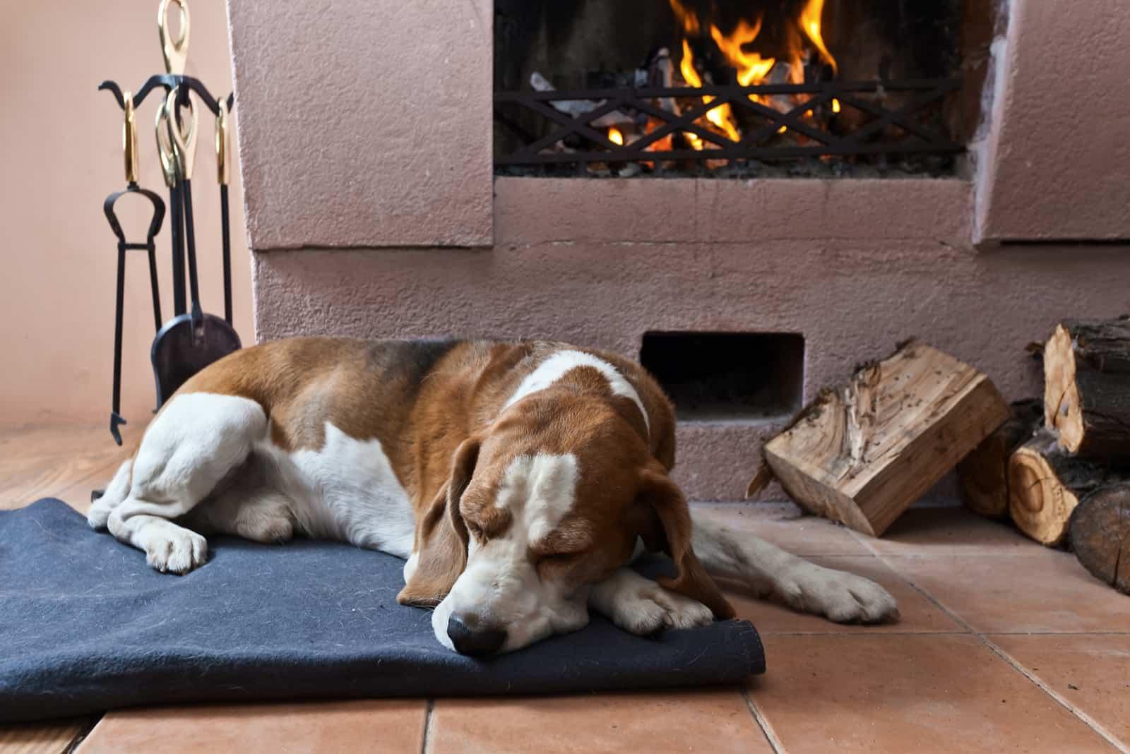 Hund ruht in der Nähe eines warmen Kamins