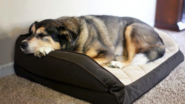 trauriger Hund liegend