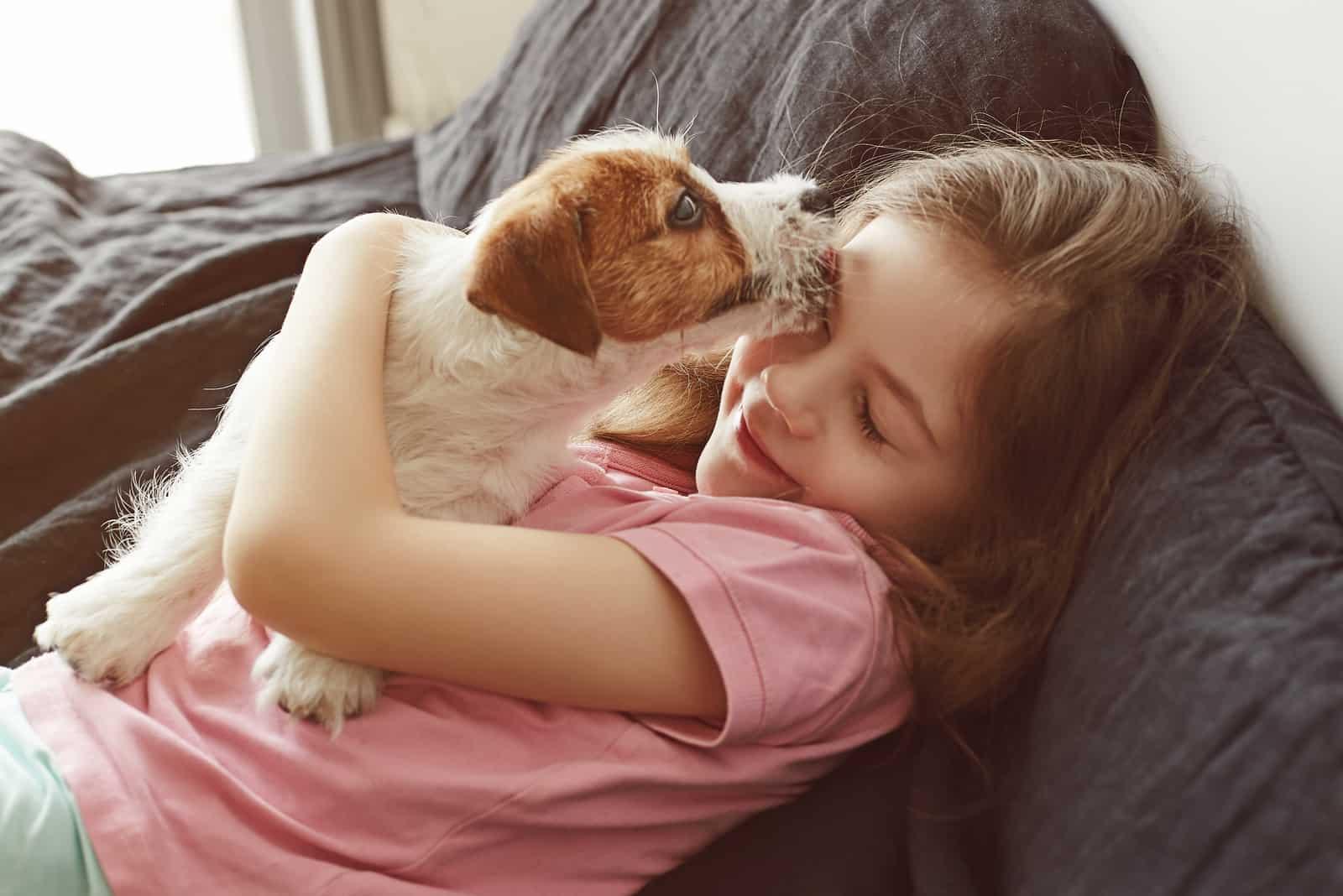 Jack Russell Terrier Welpe leckt das Gesicht des kleinen Kindes