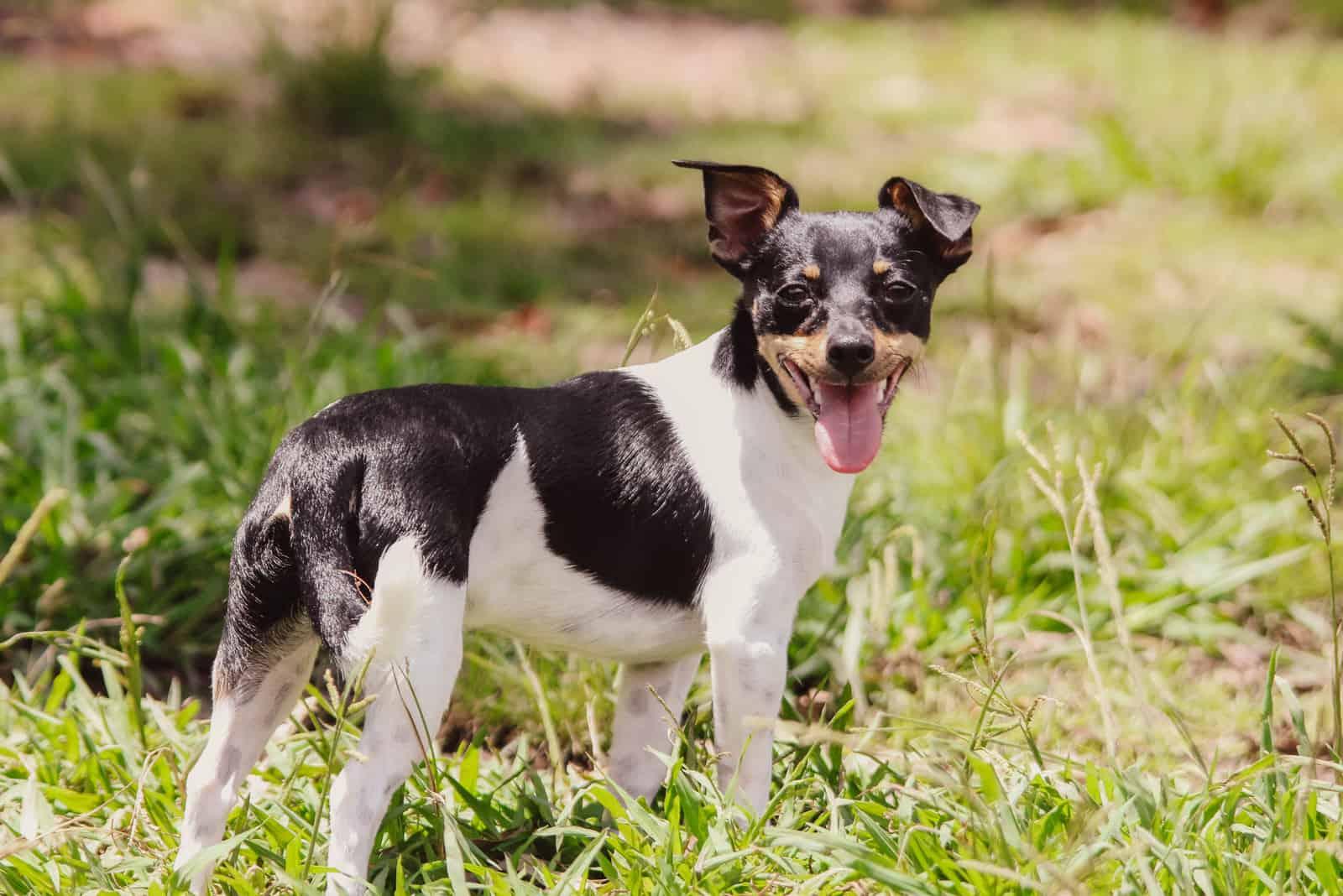 Süßer Hund im örtlichen Park
