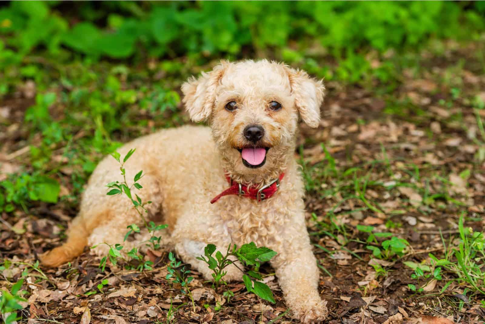 Ein süßer flauschiger Hund liegt draußen in der Natur