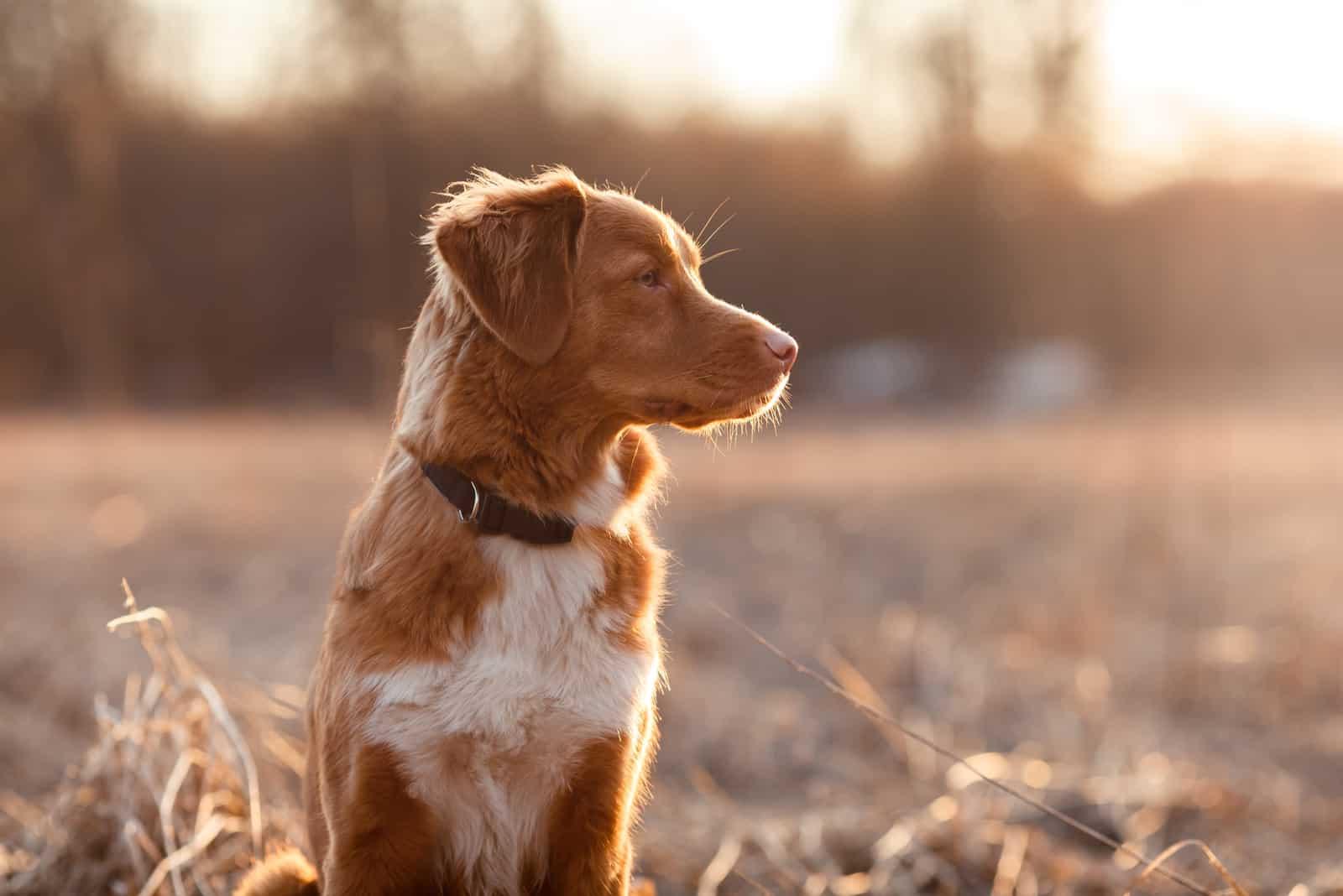 Hund draußen sitzen