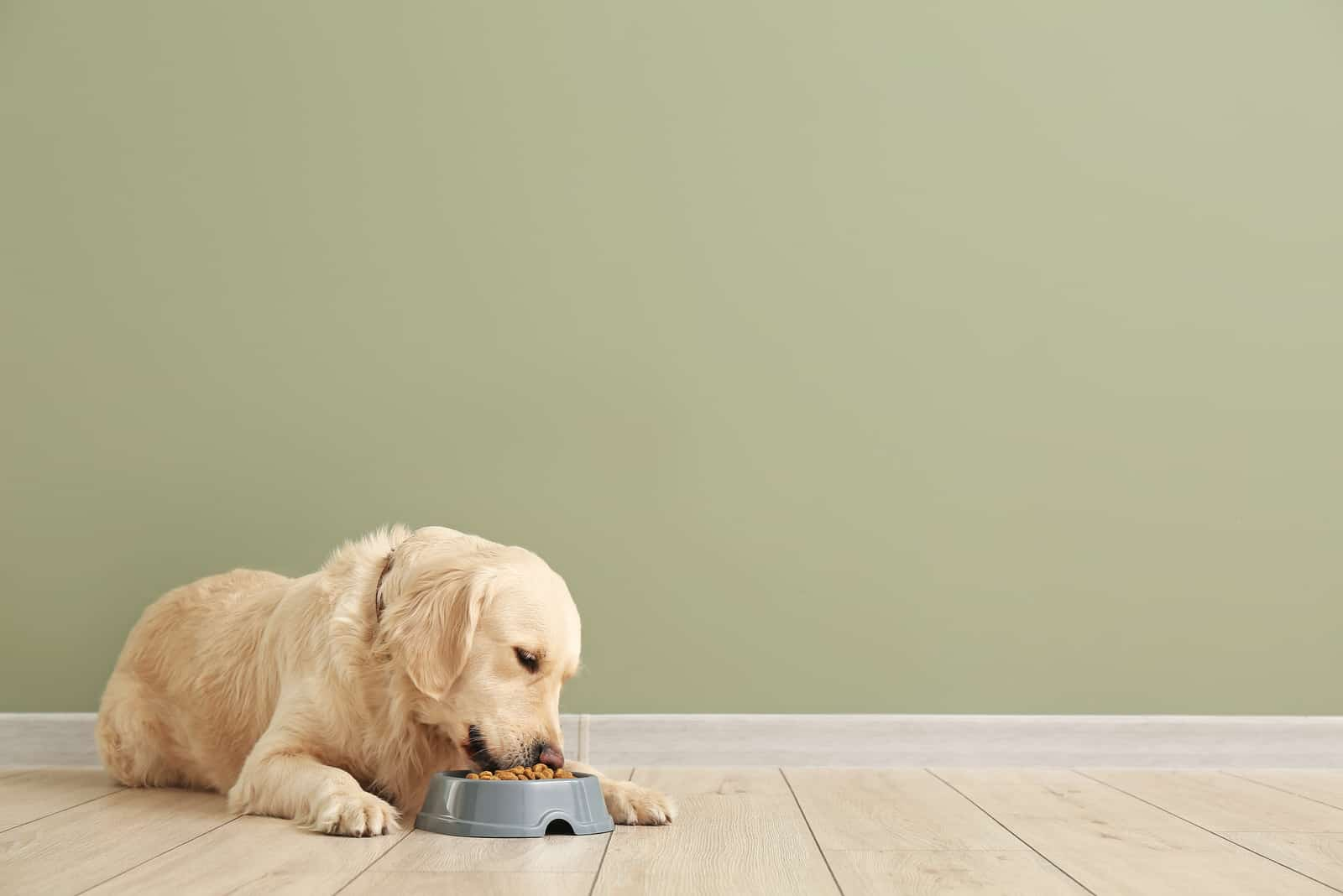 Süßer Hund, der Essen aus der Schüssel isst