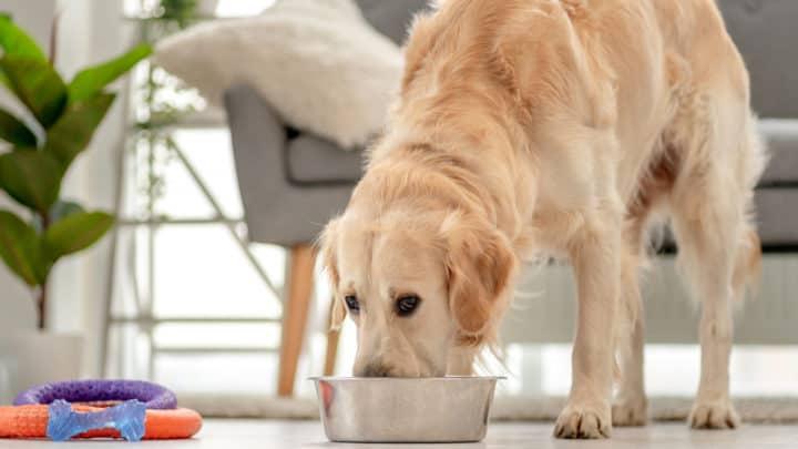 Was essen Hunde? Infos rund um die optimale Hundeernährung