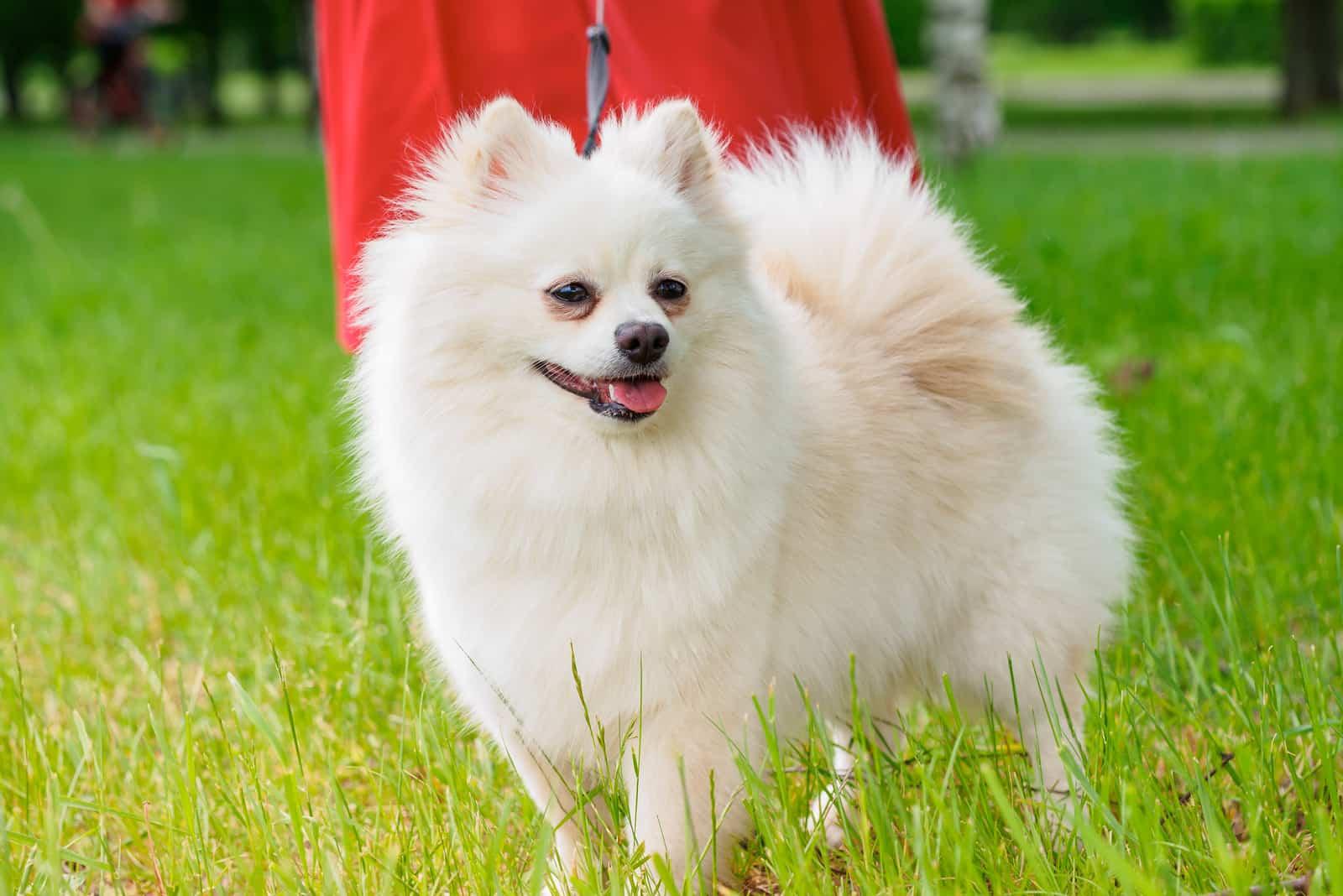 Der Hund steht auf dem grünen Gras