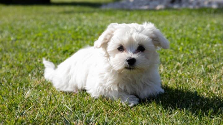 Hunde für Allergiker – Alles rund um die Hundeallergie