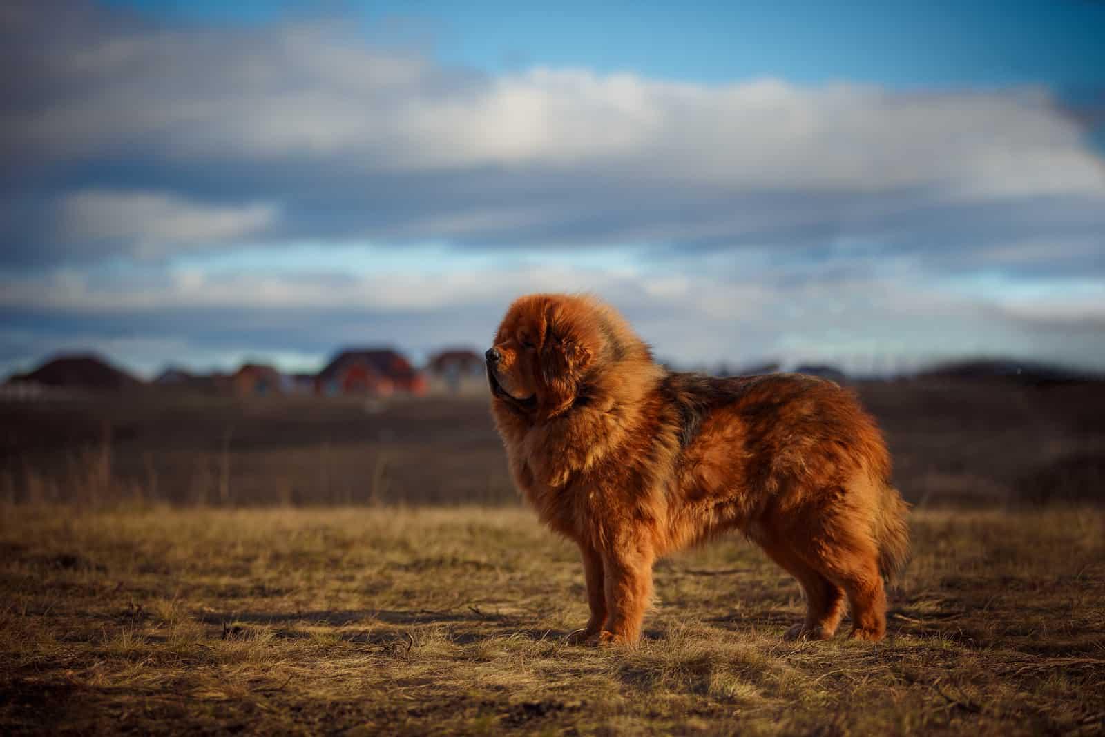 roter Hund auf dem Hintergrund eines spektakulären Himmels
