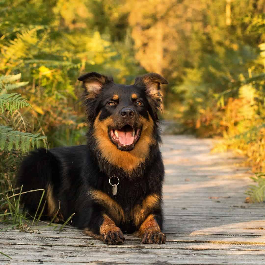hutehund mit blumen im hintergrund